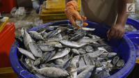 Pedagang mengecek ikan di Pelelangan ikan Muara Baru, Jakarta, Sabtu (6/7/2019). Angka ini mengalami kenaikan 24% dibandingkan periode yang sama tahun lalu yang hanya mencapai Rp32 triliun. (Liputan6.com/Angga Yuniar)