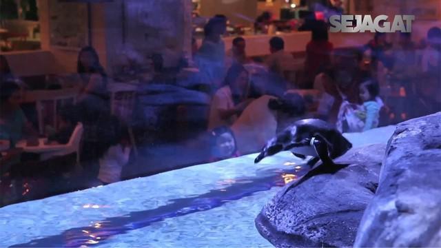 Sebuah restoran di kawasan Jakarta Barat menawarkan pengalaman makan bersama para penguin. Namun, ada pro dan kontra yang menyertainya.