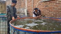 Dibantu salah satu masyarakat sekitar, Aceng Busyrol tengah memberikan pakan ikan pada budidaya ikan lele secara Biofok di pesantren Al-Hidayah Nangoh, Garut, Jawa Barat. (Liputan6.com/Jayadi Supriadin)