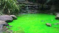 Fenomena perubahan air sungai menjadi hijau neon itu terjadi di beberapa aliran sungai di Sydney (Bella Nash/ Dailytelegraph.com.au).