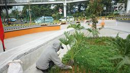 Pekerja mencabuti rumput di proyek pembangunan Taman Dukuh Atas di Jalan Jenderal Sudirman, Jakarta, Jumat (2/8/2019). Pembangunan ruang terbuka baru di Dukuh Atas ini diharapkan menjadi ruang bagi pejalan kaki dan lokasi berpindah moda transportasi. (Liputan6.com/Immanuel Antonius)
