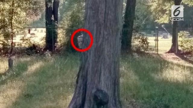 Seorang pria iseng memakai Google Map di sebuah kuburan. Tindakan itu berbuah munculnya penampakan hantu bocah berwajah layu bersembunyi dibelakang pohon.