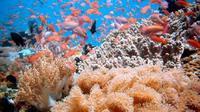Indonesia tak hanya mempunyai taman laut Bunaken, Raja Ampat, maupun Wakatobi. Masih ada beberapa surga bawah laut indah lainnya.