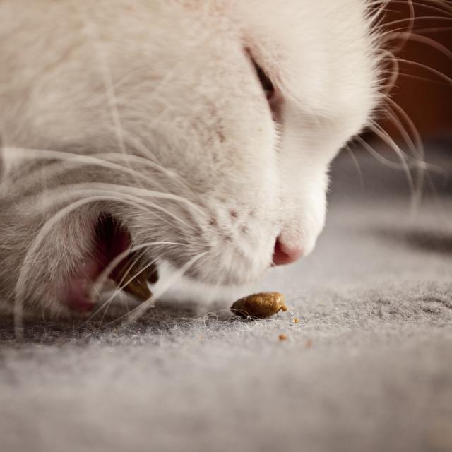 6 Penyebab Kucing Muntah Dan Cara Mengatasinya Hot Liputan6 Com