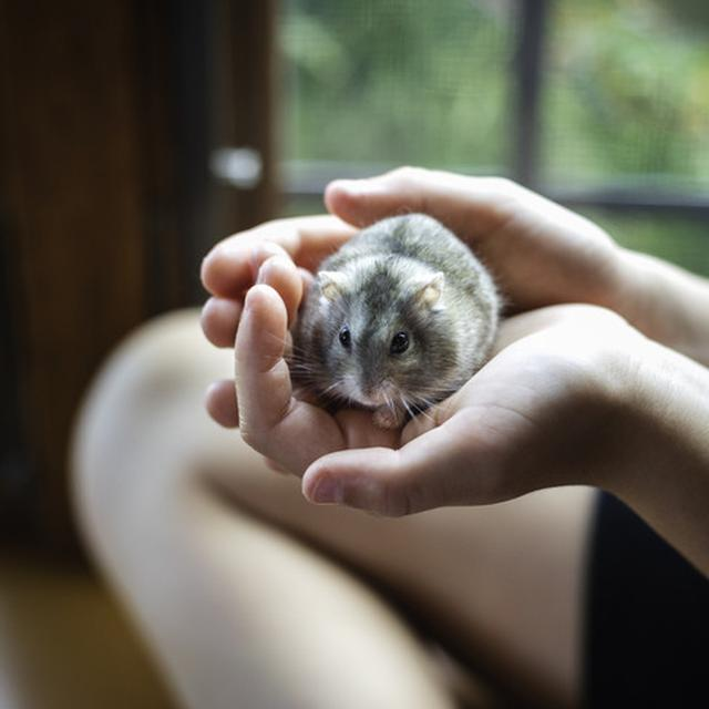 Jenis Hamster Langka dan Harganya, Bisa Jadi Referensi Hewan Peliharaan -  Citizen6 Liputan6.com