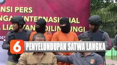 Satwa dilindungi ini masuk melalui pelabuhan tidak resmi di perairan Dumai, Riau.