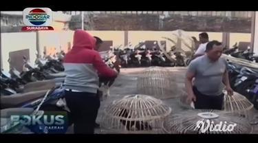Arena judi sabung ayam di perkampungan Wiyung Surabaya, digerebek anggota Polsek Wiyung. tujuh pelaku judi sabung ayam berhasil ditangkap, dan belasan ekor ayam jantan aduan disita polisi.