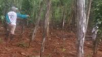 Ratusan Pohon Tanaman Terendam Lumpur Tambang, Warga Kolaka Dapat Uang Rp 5 Juta.(Liputan6.com/Foto warga)
