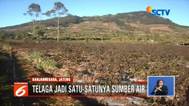 Menghadapi dampak suhu dingin yang ekstrem, ratusan petani di lereng Gunung Dieng, Banjarnegara, Jawa Tengah kini harus bekerja ekstra keras mengatasi kekeringan.