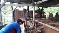 Usaha peternakan dari Abimanyu, UMKM Binaan Pertamina.