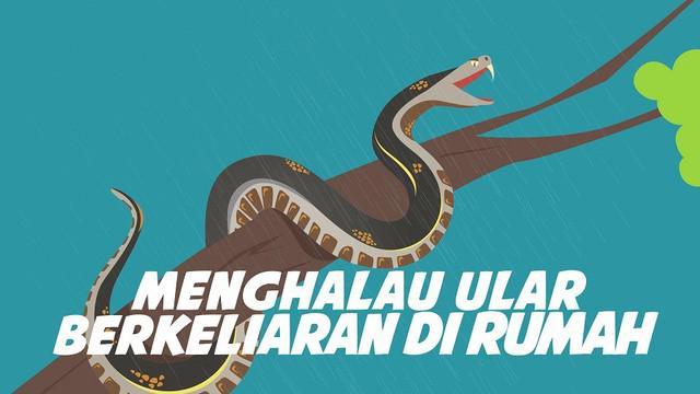 Musim hujan rawan ular masuk rumah. Karena ular suka tempat lembab musim hujan juga waktunya anak ular lahir.