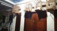 Koleksi burung pendiri sekte Kerajaan Ubur-Ubur. (Liputan6.com/Yandhi Deslatama)