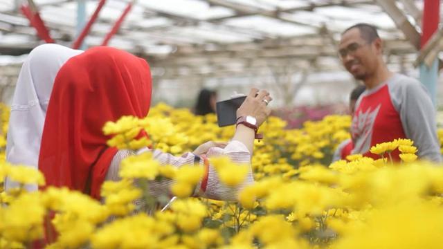 Buang Kebencian Pagi Hari Dengan Bunga Aster Regional Liputan6 Com