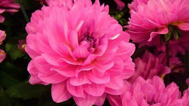 Ini Dia Bunga Bunga Tercantik Di Dunia Fashion Fimela Com