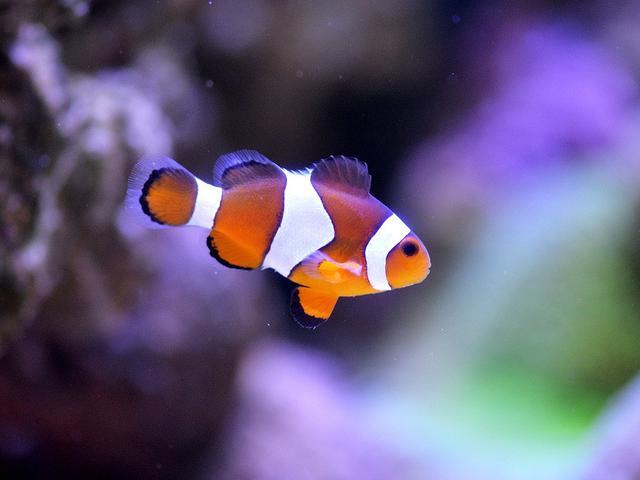 Jenis Ikan Hias Air Laut Dan Gambarnya Jenis Jenis Ikan Hias Air Tawar Dan Air Laut Untuk Aquarium Jadi Betah Memandang Citizen6 Liputan6 Com