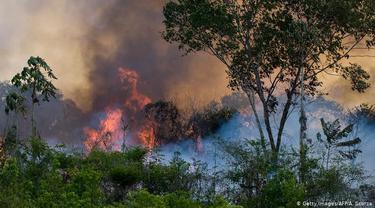 Kebakaran dahsyat di hutan hujan Amazon Brasil (AFP/A. Scorza)