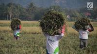 Sejumlah petani membawa hasil panen padi di Desa Bube Baru, Kecamatan Suwawa, Kabupaten Bone Bolango, Gorontalo, Jumat (15/3). Mereka bergotong royong di sawah dengan menyambut musim panen dengan begitu ceria. (Liputan6.com/Arfandi Ibrahim)