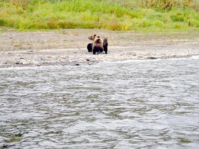 Induk beruang dan kedua anaknya sebelum sang induk meninggal mereka | Photo: Copyright dailymail.co.uk