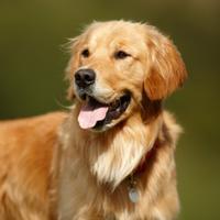 Anjing juga punya bahasa tubuh, loh!