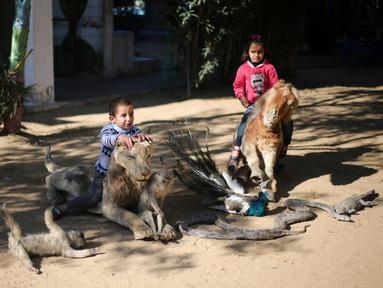 Anak-anak Palestina menunggangi hewan yang telah diawetkan di kebun binatang kawasan Rafah sebelah selatan Jalur Gaza, Selasa (3/1). Menurut pemiliknya, hewan tersebut mati karena ia tidak mampu memberinya makan. (REUTERS / Ibraheem Abu Mustafa)