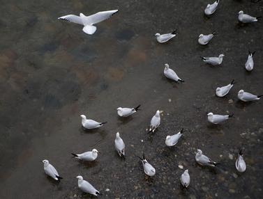 FOTO: Melihat Migrasi Kawanan Burung di Iran