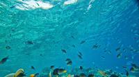 Ilustrasi alam bawah laut (sumber: pixabay)