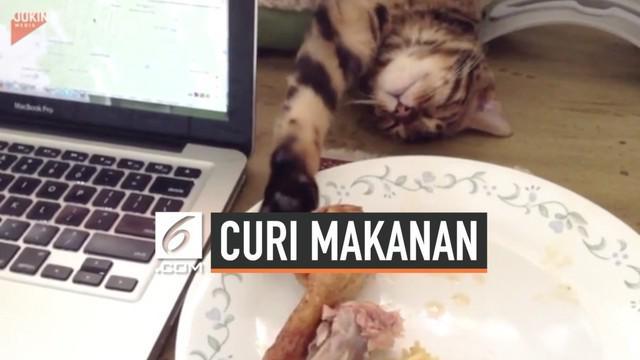 Kucing punya segala trik untuk melakukan modus operandi pencurian makanan. Salah satunya adalah kucing ini yang pura-pura tidur saat mencuri ayam goreng.