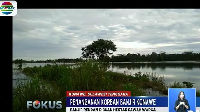 Selain merendam permukiman warga, banjir yang melanda 25 kecamatan di Kabupaten Konawe ini juga membuat ribuan hektar sawah milik warga gagal panen.
