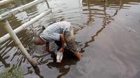 Namak ikan mati akibat tercemar limbah kotoransapi PT Rafles, Garut, Jawa Barat (Liputan6.com/Jayadi Supriadin)