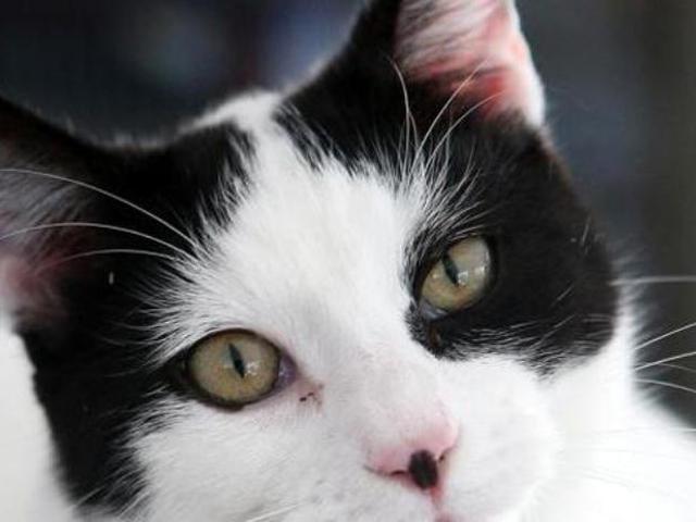 Wow 30+ Gambar Kartun Kucing Sedih - Gani Gambar