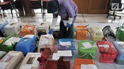 Dokter dari Pusat Pelayanan Kesehatan Hewan dan Peternakan KPKP menyiapkan kucing yang akan dikebiri di Jakarta, Rabu (27/2). Program kebiri kucing jantan ini dalam rangka menekan angka populasi dan mencegah rabies. (Merdeka.com/Iqbal S. Nugroho)