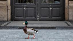 Seekor bebek berjalan di sebuah ruas jalan di Paris, Prancis (6/4/2020). Prancis memberlakukan lockdown nasional selama dua pekan mulai 17 Maret lalu, yang kemudian diperpanjang hingga 15 April. (Xinhua/Aurelien Morissard)