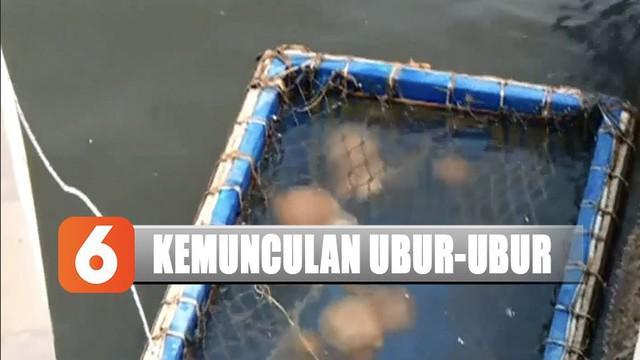 Petugas pun memasang papan imbauan agar para pengunjung pantai menghindari ubur-ubur saat bermain di air.