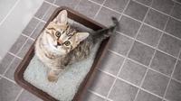 Ilustrasi Kucing/Shutterstock