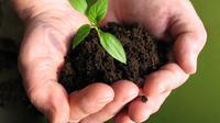 Ilustrasi tanaman langka yang akan ditanam sebagai upaya penghijauan Bandung. (Flickr)