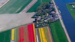Deretan bunga tulip warna-warni di ladang De Keukenhof di Lisse, Belanda, Jumat (20/4). Ladang tulip tersebut menarik sekitar satu juta turis dari seluruh dunia setiap tahunnya. (AP Photo / Peter Dejong)