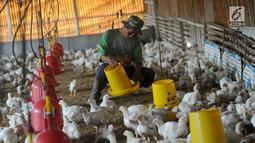 Peternak memberikan makan pada ayam pedaging broiler di kawasan Cipelang, Bogor, Jawa Barat, Selasa (24/7). Menurut peternak, kenaikan daging ayam disebabkan harga day old chicken (DOC) atau  bibit ayam yang fluktuatif. (Merdeka.com/Arie Basuki)
