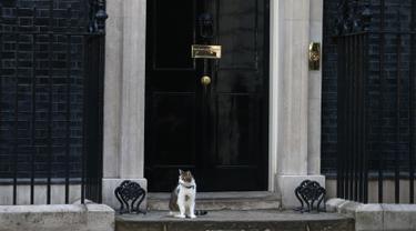 """Larry, kucing yang menjabat sebagai """"Kepala Pemburu Tikus""""  duduk di luar kantor PM Inggris, Downing Street 10 di London, Rabu (13/7). Meski David Cameron mundur sebagai PM Inggris, Larry tetap tinggal bersama PM baru, Theresa May. (JUSTIN Tallis/AFP)"""