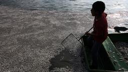 """Seorang anak mengumpulkan puluhan ribu ikan air tawar """"popocha"""" yang mati di laguna Cajititlan, negara bagian Jalisco, Meksiko, 17 Agustus 2015. Diduga sekitar 25 ton ikan mati karena tercemar limbah pabrik. (AFP PHOTO/HECTOR GUERRERO)"""