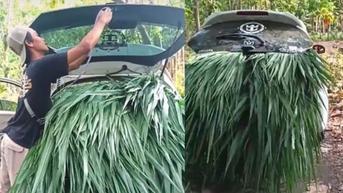 Tak Ada Mobil Bak Buat Angkut Rumput, Honda Brio pun Jadi