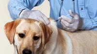 Dokter hewan rekomendasikan vaksin rabies dilakukan setahun sekali. (www.petconnection.com)