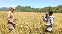 Ilustrasi penyuluh petani/pertanian.go.id.