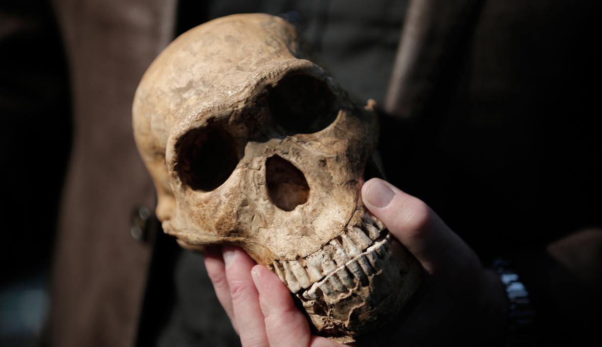 Fosil spesies Homo Naledi Hominin yang ditemukan tim peneliti dari Universitas Johannesburg, Afsel, Selasa (9/5). Fosil tersebut ditemukan di dalam sebuah gua di luar Johannesburg, tersembunyi dalam satu rongga yang curam dan sempit. (AFP/GULSHAN KHAN)