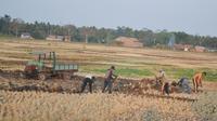 Petani di Cilacap menjual bongkahan tanah sawah pada musim kemarau. (Foto: Liputan6.com/Muhamad Ridlo)