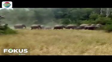 Konflik antara manusia dan kawanan gajah di Kabupaten Bener Meriah, Aceh, terus terjadi. Gajah tersebut masuk area permukiman warga diduga karena kehilangan habitat.