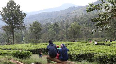 Libur Panjang Akhir Pekan, Warga Berwisata di Kawasan Kebun Teh Puncak