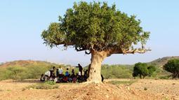 Para pelajar Yaman yang terlantar mengikuti kegiatan belajar di bawah pohon sebuah lapangan, di distrik Abs utara, Yaman pada 28 Oktober 2018. UNICEF menyebut sekitar dua juta anak di Yaman putus sekolah, sejak konflik melanda pada 2015. (ESSA AHMED/AFP)