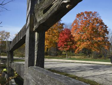 FOTO: Warna-warni Pepohonan Saat Musim Gugur di Illinois
