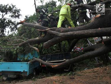 Hujan Disertai Angin Kencang, Pohon Tumbang Timpa Mobil di Ciputat