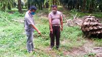 Penemuan bayi terjadi pada Minggu, 26 April 2020, sekitar pukul 14.40 WIB. Saat itu pria 30 tahun tersebut sedang bekerja mengambil pelepah kelapa sawit untuk dijadikan lidi